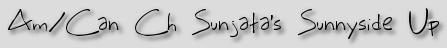 Am/Can Ch Sunjata's Sunnyside Up