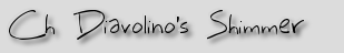 Ch Diavolino's Shimmer