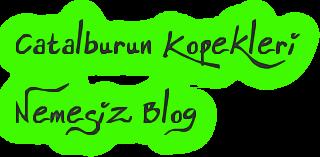Catalburun Kopekleri  Nemesiz Blog