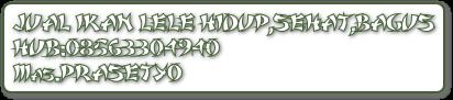 JUAL IKAN LELE HIDUP,SEHAT,BAGUS HUB:08563304940 Mas.PRASETYO
