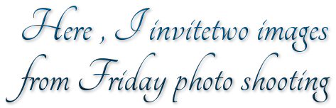 Here , I invitetwo images from Friday photo shooting
