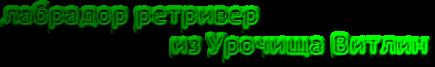 """Питомник лабрадоров """"из Урочища Витлин"""""""